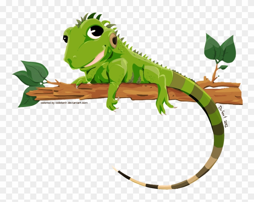 Iguana Png Transparent Image - Iguana Vector #687113