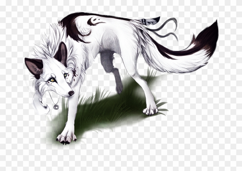 male vs female wolf anatomy gene white and black male alpha female