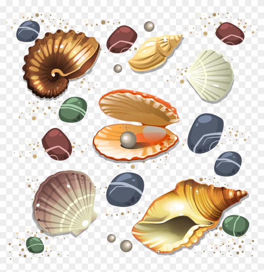 Seashell Conch Scalable Vector Graphics - Sea Shells Vector #692995