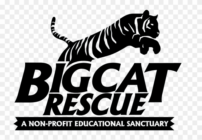 Big Cat Rescue Is Caring For Big Cats And Ending The - Big Cat Rescue Tampa #696944