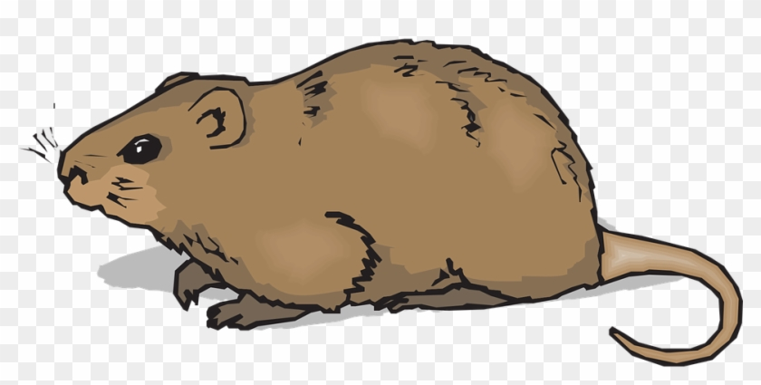 Gopher Cliparts 13, Buy Clip Art - Hamster Clipart #700128