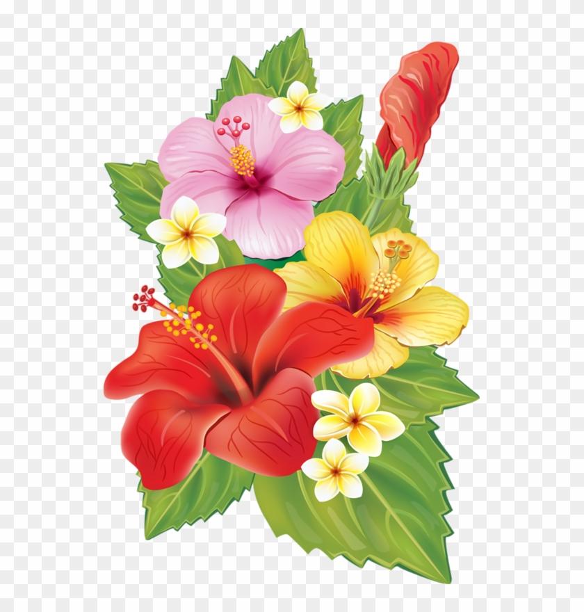 Plumeria Clipart Red Hibiscus Flower - Hibiscus Flowers #701528