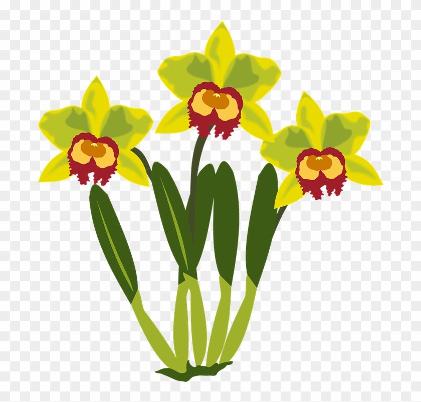 Clip Art Flor Flora Flower Nature Orchid Orchids - Clip Art #135849