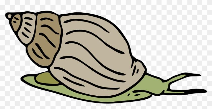 Mollusc Clipart Different - Clip Art Picture Of Snail #135964