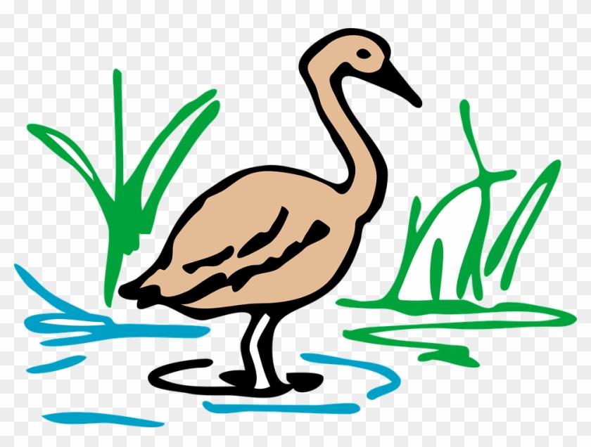 Brown Duck Goose Bird Waterfowl Standing Still - Duck Drawing In Color #137344
