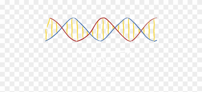 If The Twist Of Two Adjacent Helices Line Up, We Create - Dna Strand No Background #733434