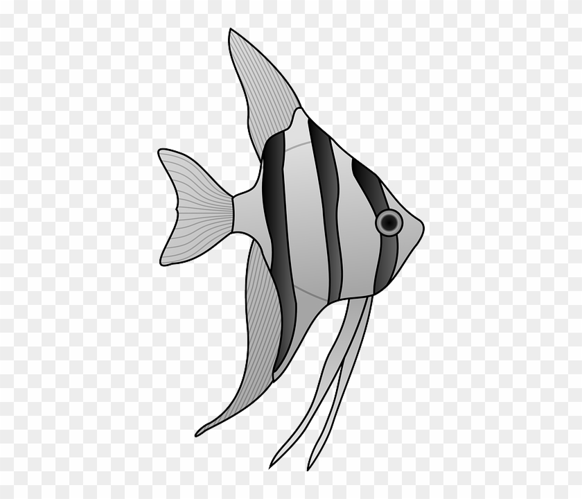 animals outline drawing cartoon angel fish white and black
