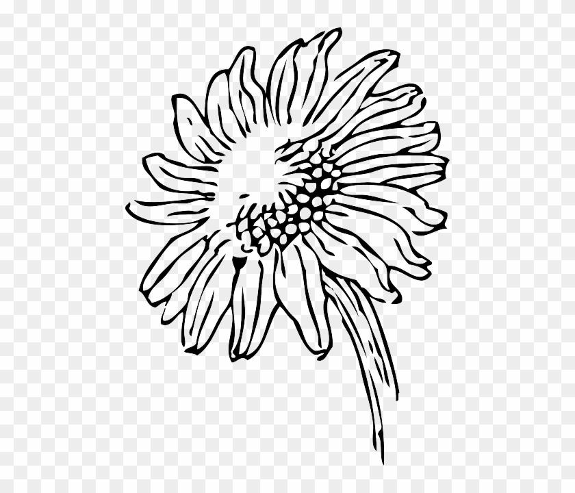 Black Outline Drawing Sketch Sun Flower White
