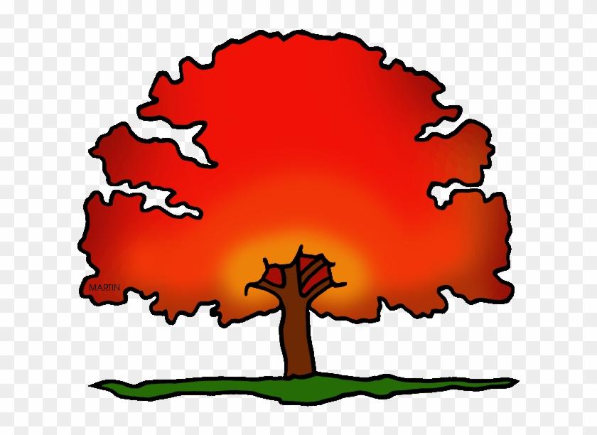New Jersey State Tree - New Jersey's State Tree #752660