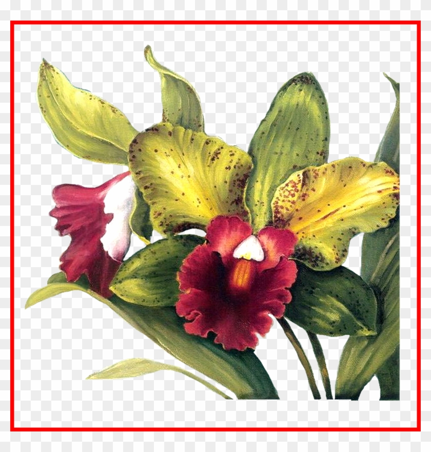 Orchid Tattoo Orchid Cattleya Trianae Tattoo Shocking Lisa Audit