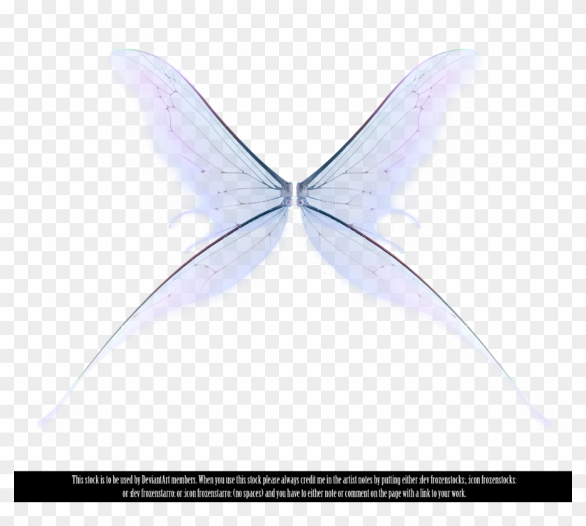 Tinkerbell White Background Tinkerbell White Background - Fairy Wings On Transparent Background #754570