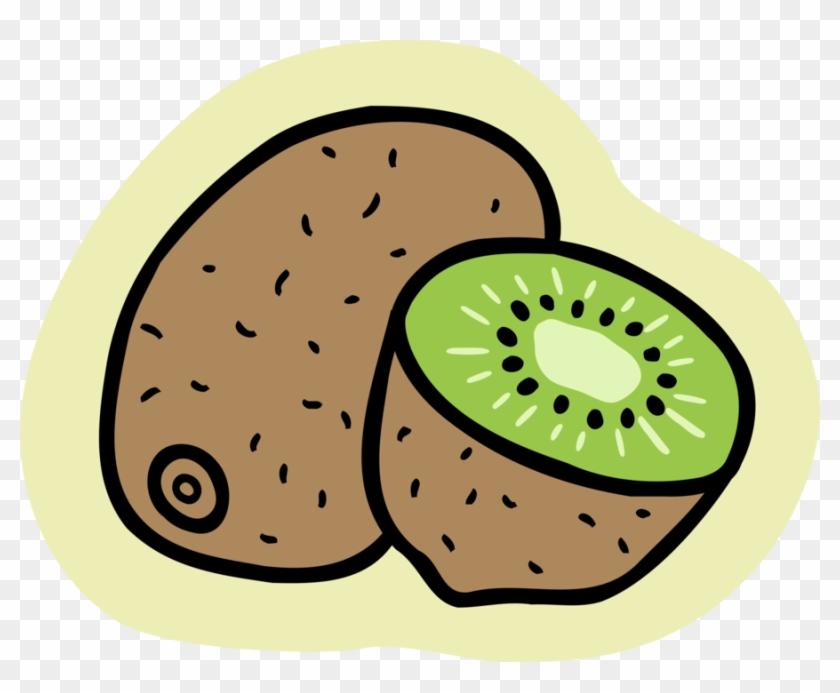 Vector Illustration Of Kiwifruit, Chinese Gooseberry - Kiwi #756927