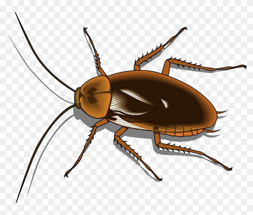 Insect 25 Free Vector - Cartoon Pictures Of Cockroaches #758284