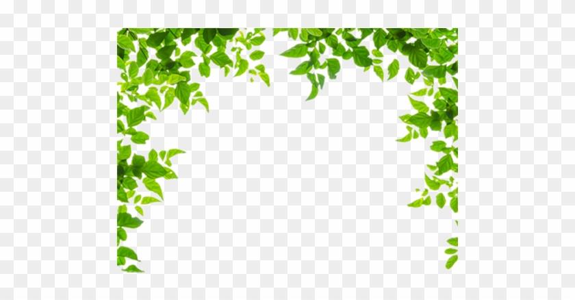 Borders And Frames Leaf Green Clip Art Green Leaves - Leaf Borders ...