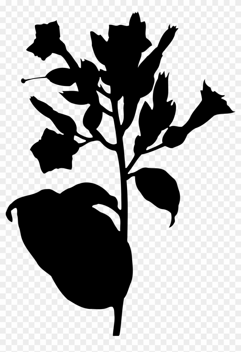 Clipart - - Tobacco Plant Png #759611