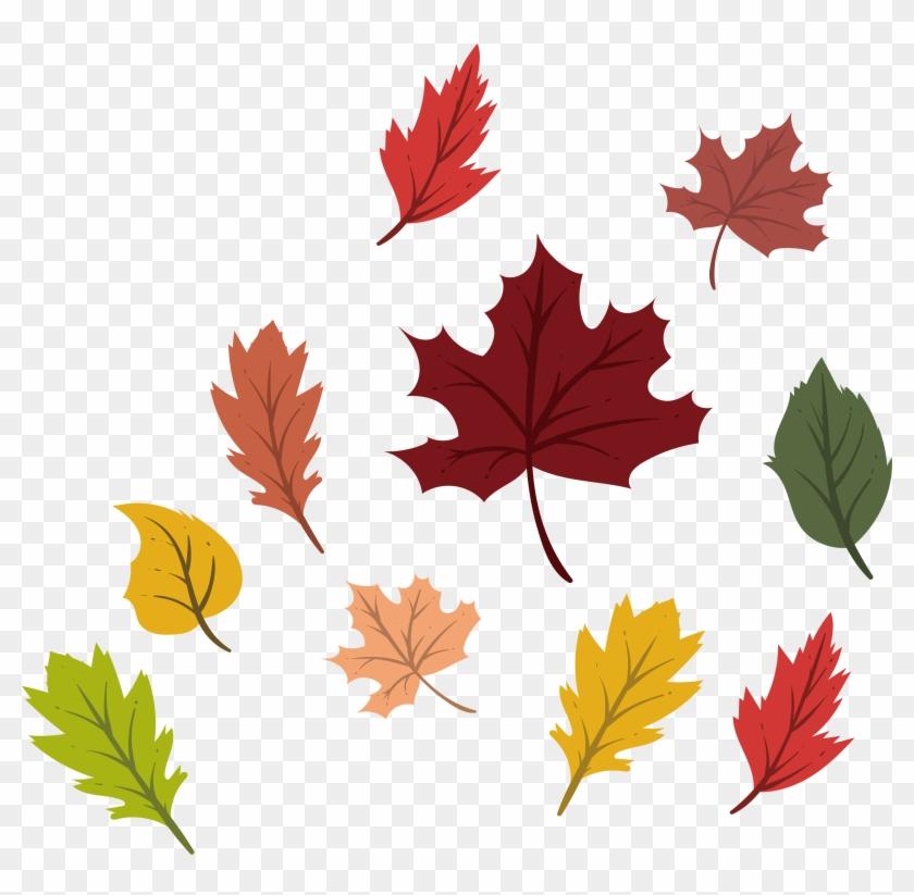 Maple Leaf Autumn Deciduous - Maple Leaf #759751