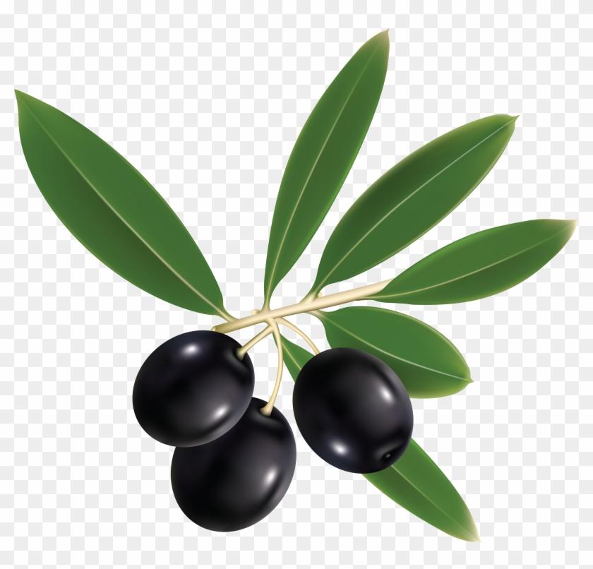 Olives - Olive Oil Label Png #761218