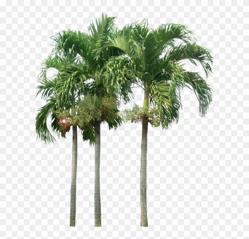 Tropical Plant Pictures - Palm Trees Elevation Png #761605