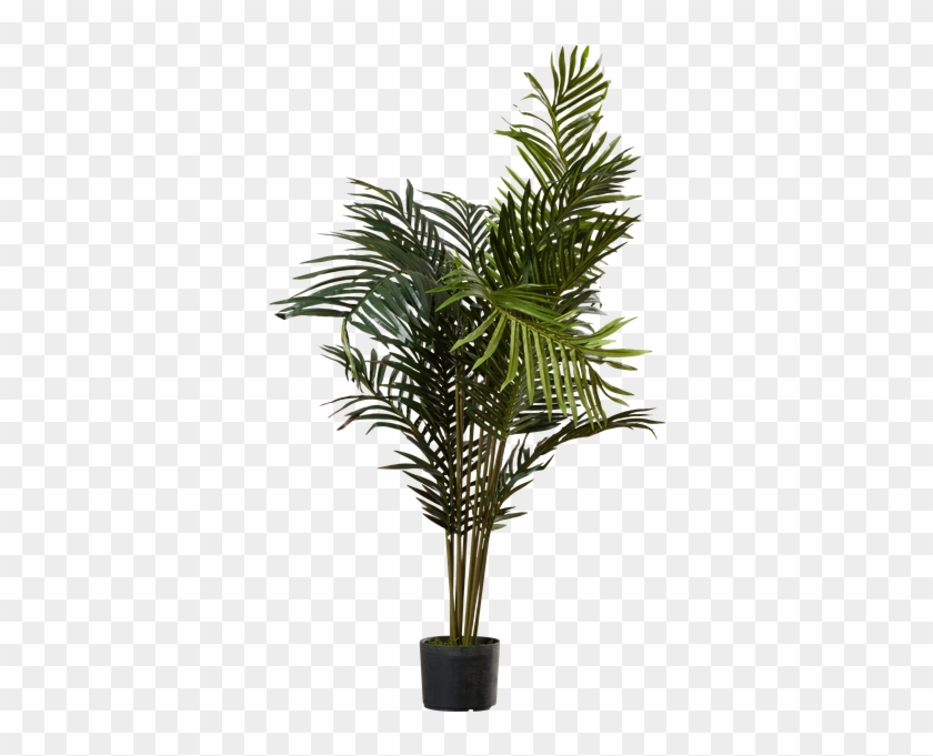 Black Hammock Palm Tree With Pot By Beachcrest Home - Palm Trees #762079