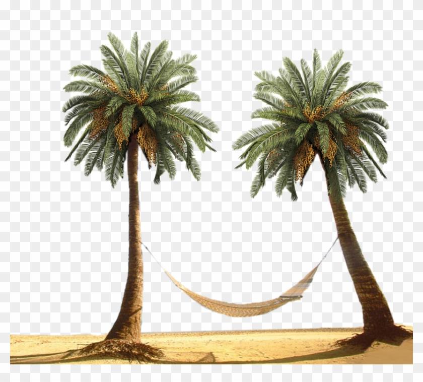 Palm Tree By Designway24 - Palm Tree Beach Png #762128