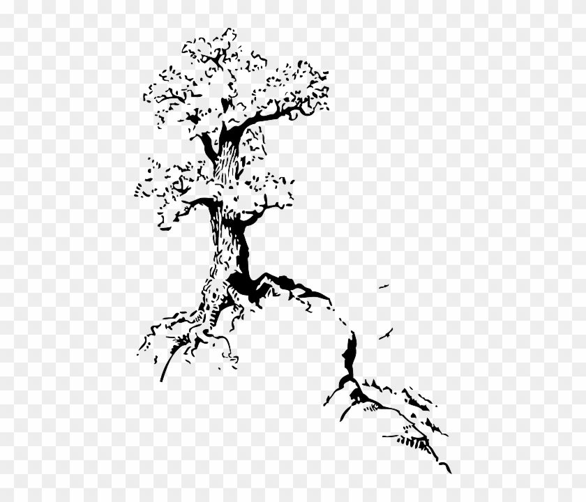 Top, Outline, Silhouette, Tree, Roots, White - Quotes About Trees Drawing #762887