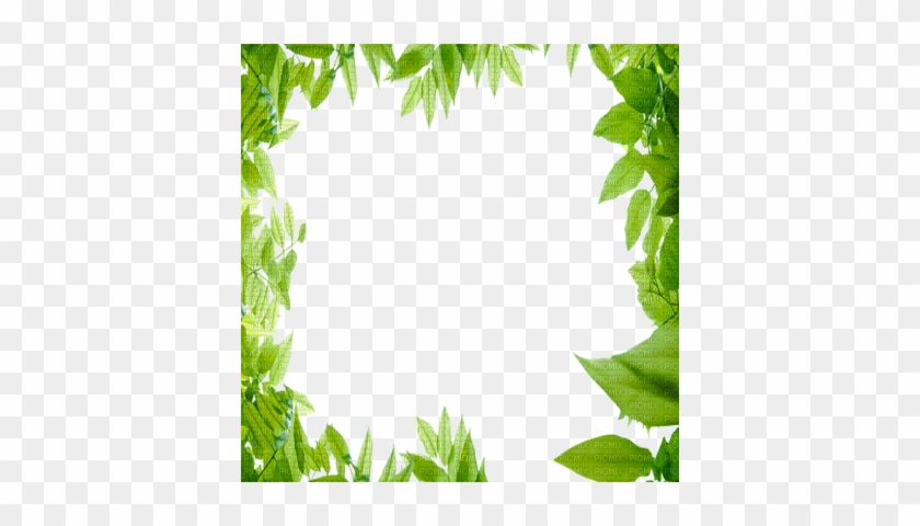Green Leaves Frame - Nature Frame - Free Transparent PNG Clipart ...