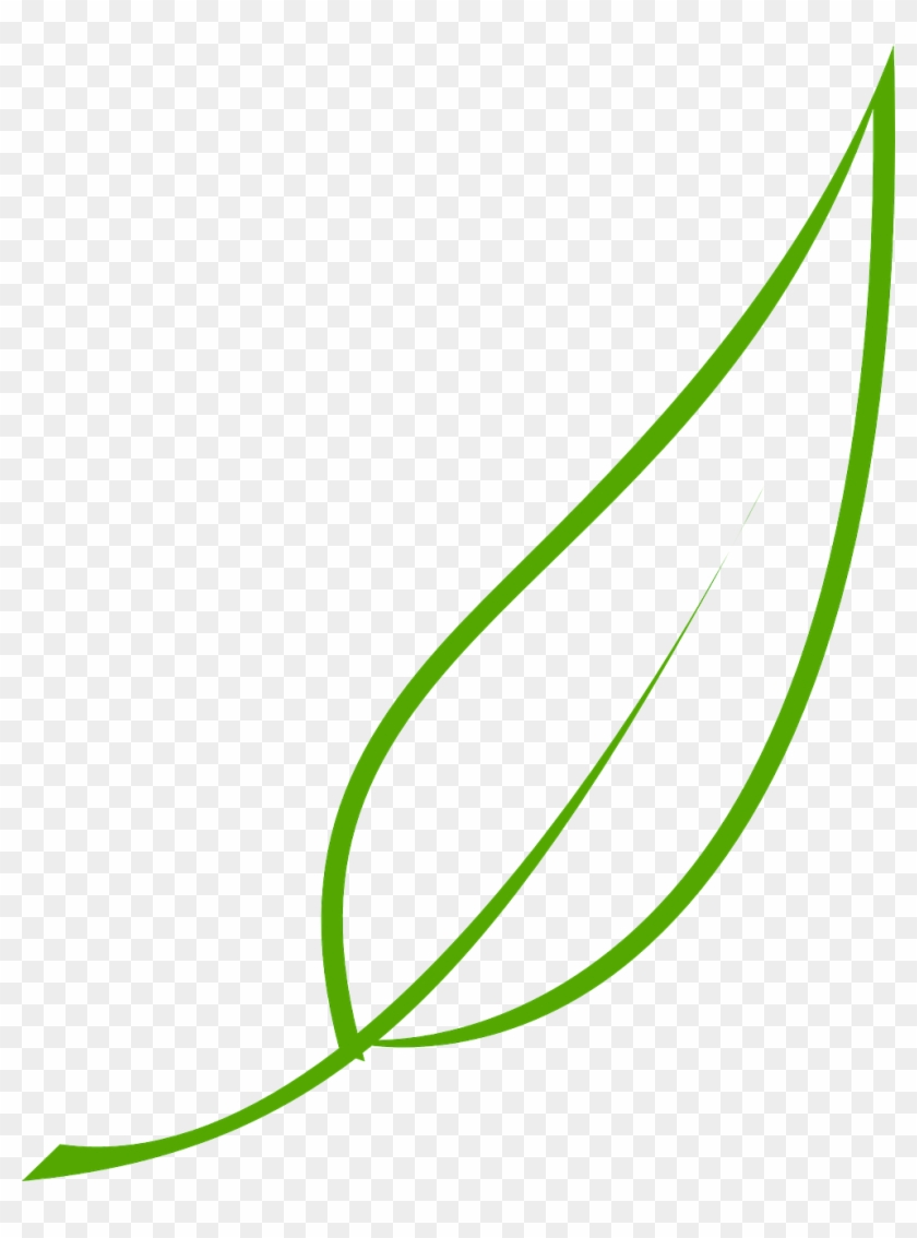 Leaf, Green, Tea, Olive, Graphic, Natural, Environment - Leaf Clipart Vector #765965
