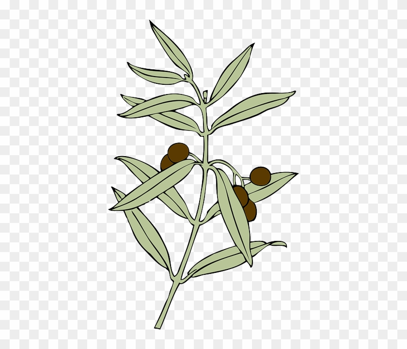 Drawing Tree Branches Cartoon Branch Free Olive Branch Animated Free Transparent Png Clipart Images Download To effectively draw pine tree bark, you will need to. drawing tree branches cartoon