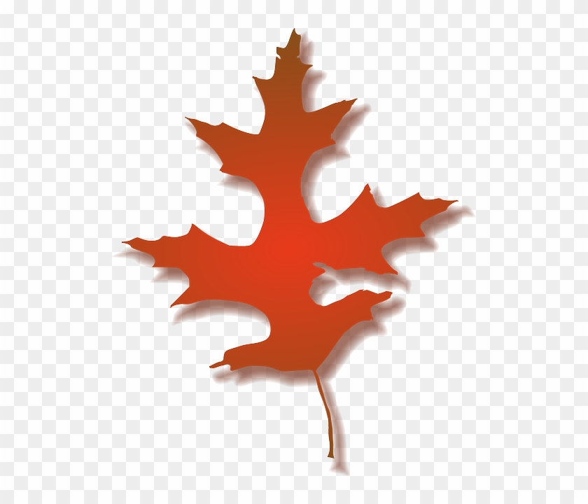 Leaf, Tree, Nature, Autumn, Color - Fall Oak Leaf Clipart #766677