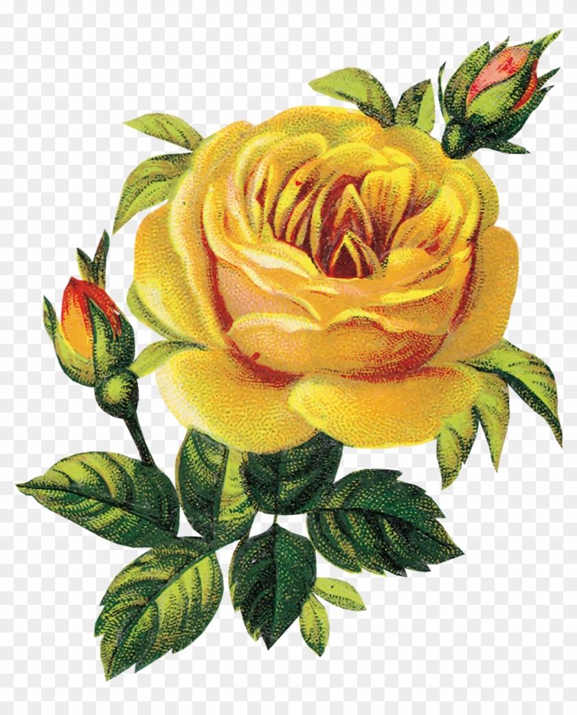Flower Yellow Rose Flower Yellow Rose Free Transparent Png
