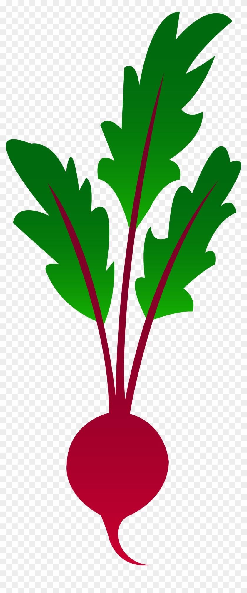 Red Garden Beet - Beet Clip Art #140009