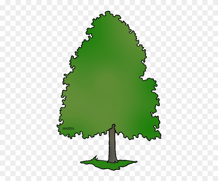 Delaware State Tree American Holly Clipart - Delaware State Tree #145661