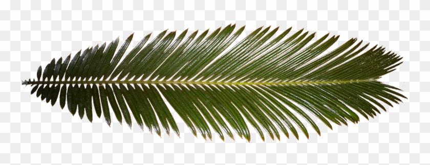 Ferns In The Tropical Rainforest Download - Palm Tree Leaf Texture #777695