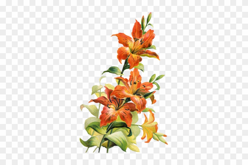 Image 195832 Tiger Lily Flower Clipart Free Clip Art - Tiger Lily Flower Art #778759