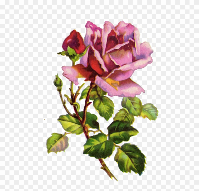 ✿fragrant Scent Of Roses✿ Purple Rose - Vintage Flower Watercolor Painting #781703