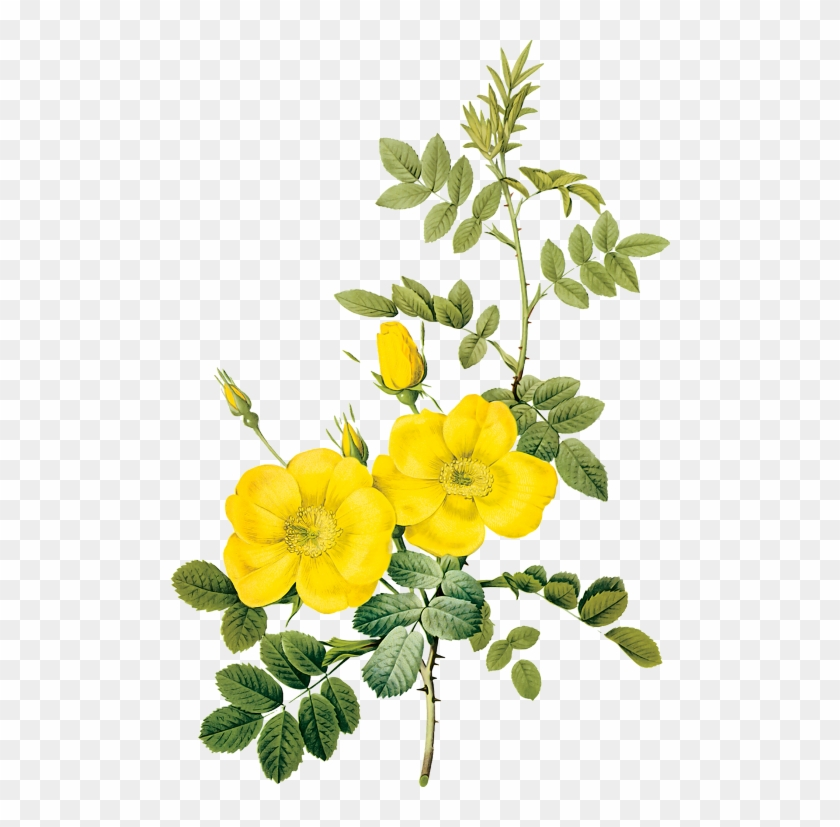 Yellow Flower Paintings Images Flower Decoration Ideas - Yellow Flower Illustration #782643