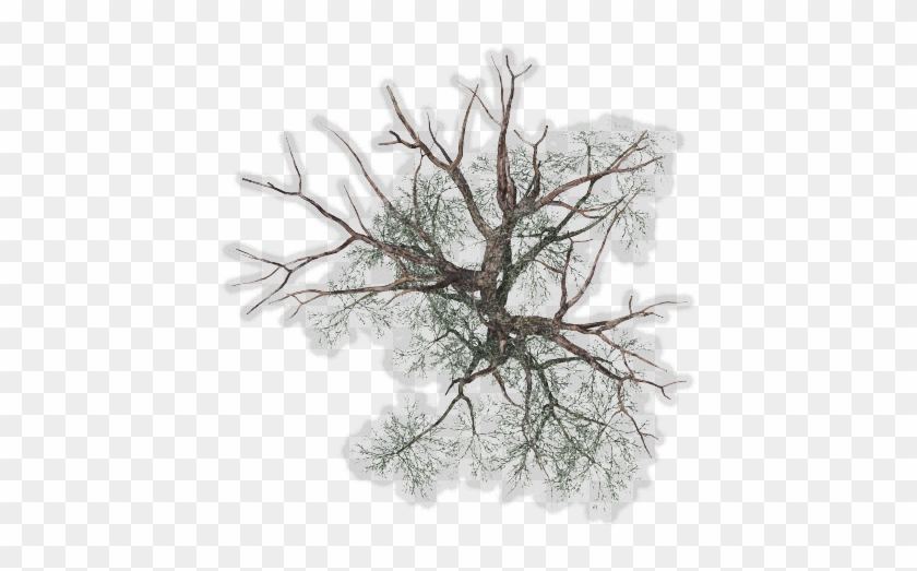 Winter Tree Png - Winter Trees Top View Png #790265