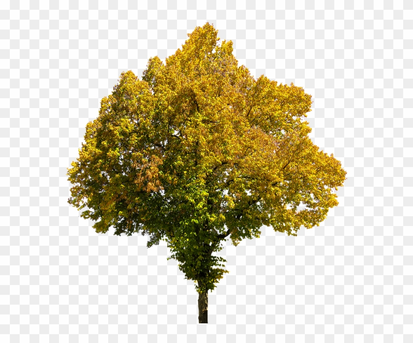 Autumn, Time Of Year, Tree, Leaves, Png, Isolated - Fall Tree Transparent Background #792578