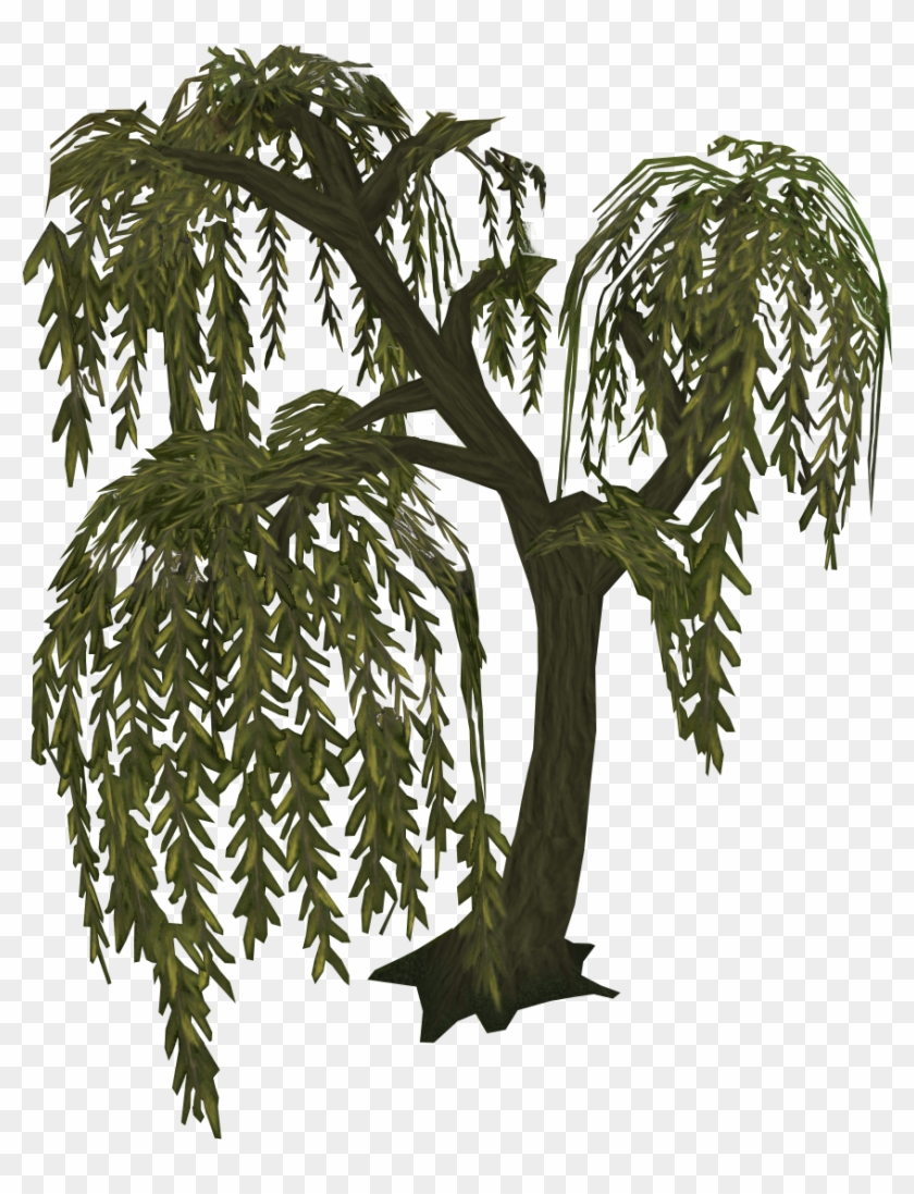 Willow Tree Cb Edits Png Tree Free Transparent Png Clipart