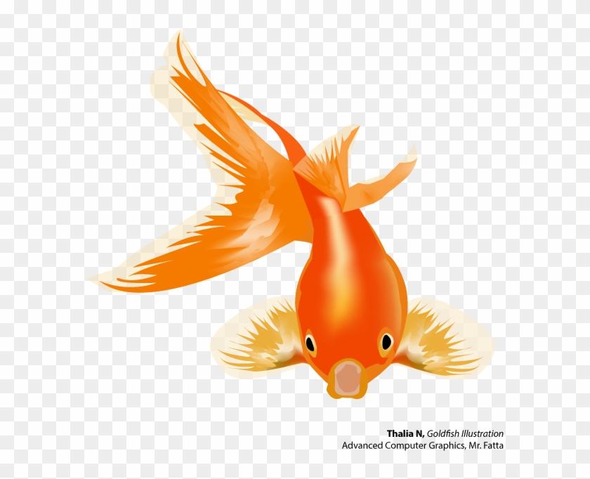 Fish Goldfish Thalian - Goldfish Vector Png #793810
