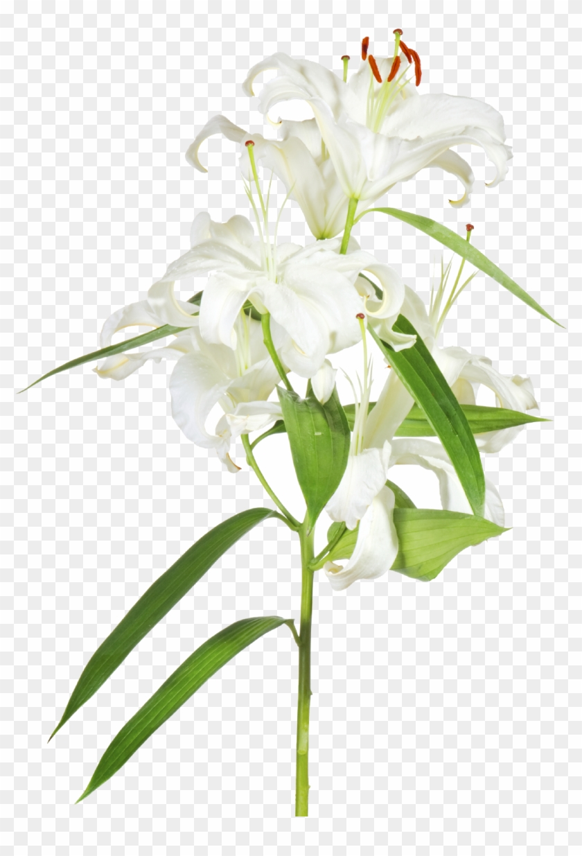 Easter Lily With Cross Clipart - Easter Lily Transparent #800317
