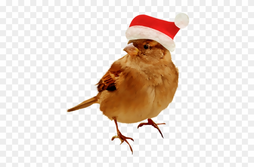 Christmas Birds - Клипарт Зимние Птицы На Прозрачном Фоне #801803