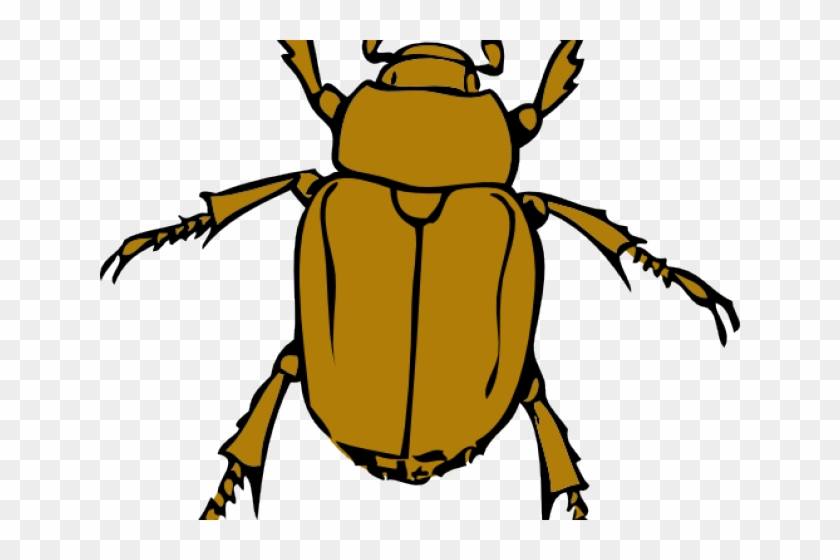 insects cliparts beetle bug free transparent png clipart images rh clipartmax com free insect clipart images cricket insect clipart free