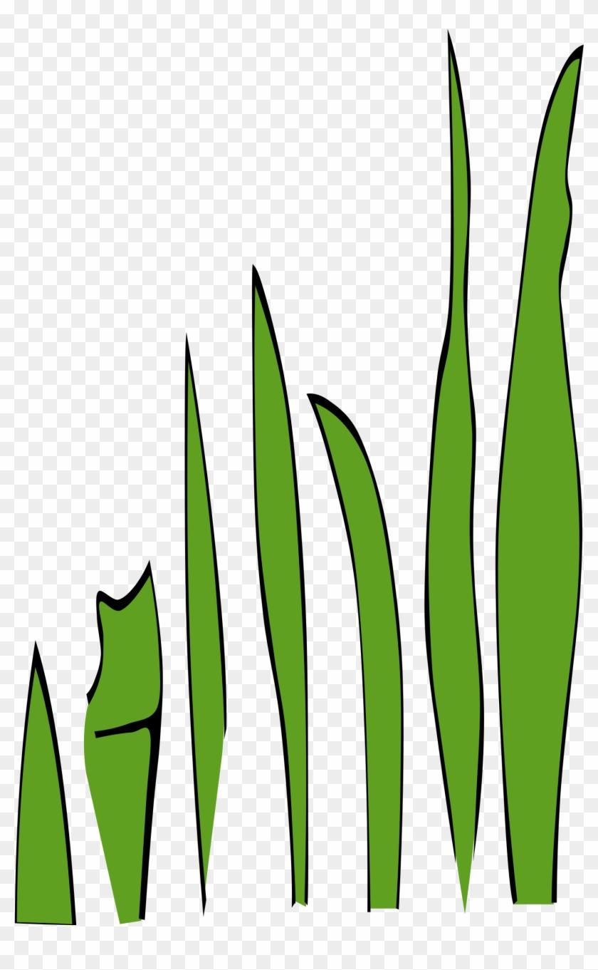 Other Clipart Gambar Kartun Rumput Laut Free Transparent