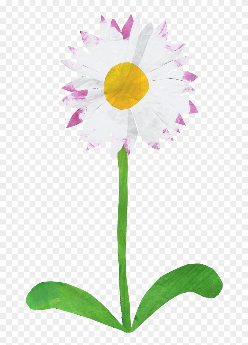 Birth flower common daisy sweet pea gift birth flower common daisy birth flower common daisy sweet pea gift birth flower common daisy sweet pea gift izmirmasajfo