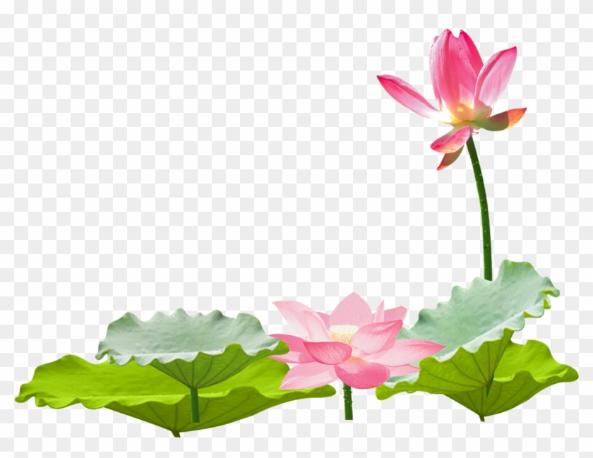 Lotus Flower Chinese Asian Ftestickers 免 摳 荷花 風景 Free
