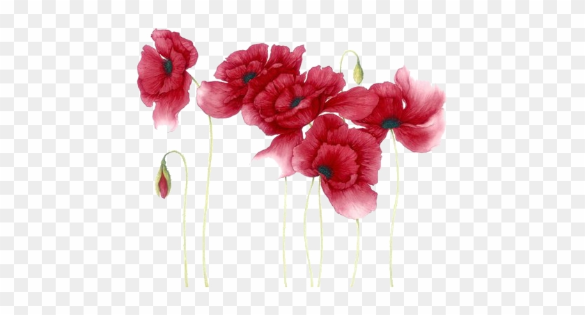 Watercolour Flowers, Watercolour Paintings, Watercolor - Red