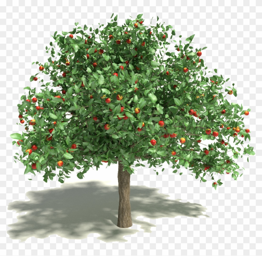 Hang Out With Henry Fonda Every Day We Almost Always - Apple Tree #809047