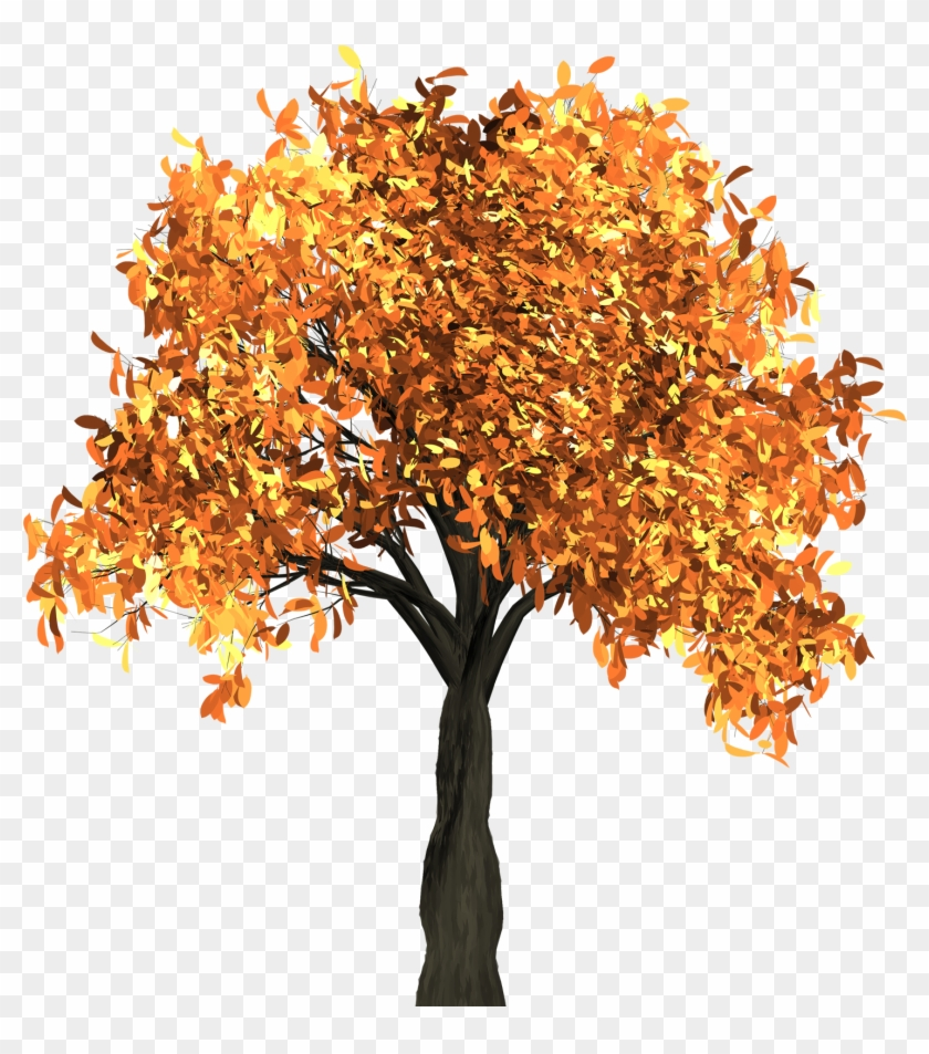 Apple Tree Has Yellow Leaves Download - Fall Tree Transparent Background #809110