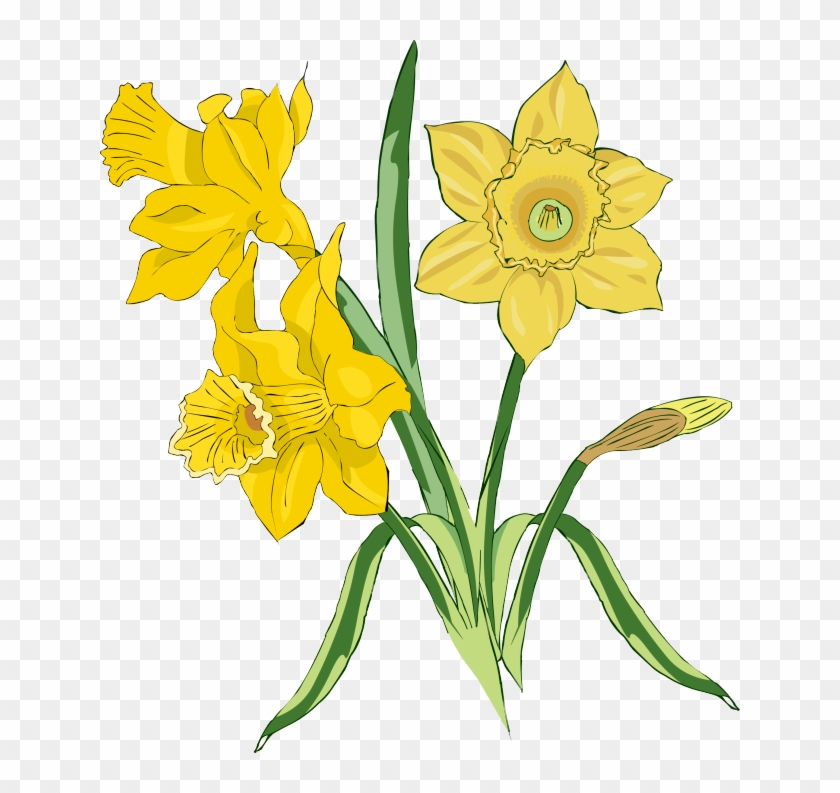Web Design Daffodils, Clip Art And Craft - Tulips And Daffodils Clipart #151997